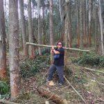 Eucalyptus plantation harvest