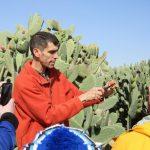 Thru Negev to Cactus Farm